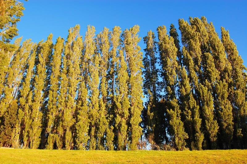 Die Bäume lizenzfreie stockfotografie