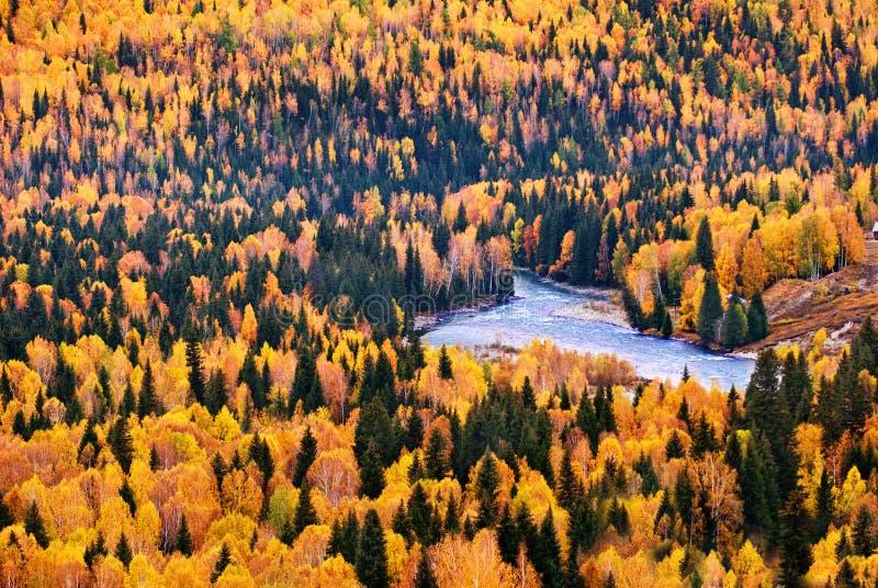 Die Bäume im Herbst lizenzfreies stockfoto
