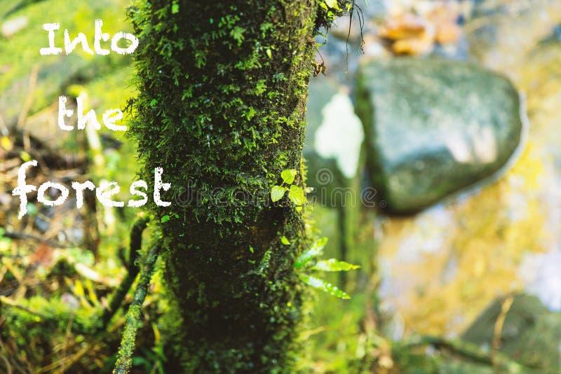 Die Bäume im Wald sind fruchtbar und die Mitteilung stockbilder