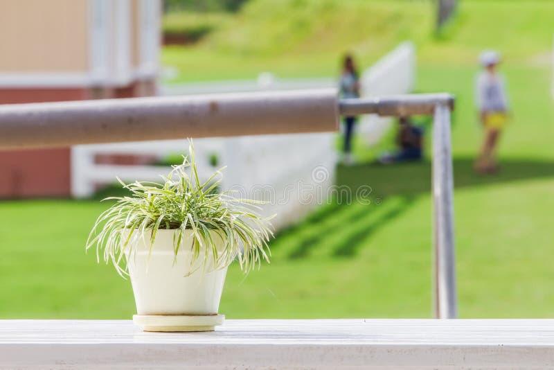 Die Bäume sind in der weißen Fliese des Blumentopfes, die auf einen Holztisch, ein weißer Hintergrund gesetzt wird stockbilder