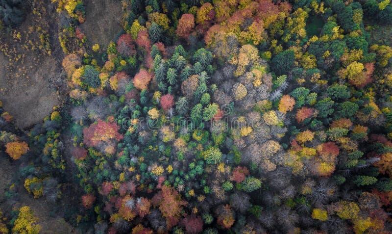Die B?ume des Waldes von der Draufsicht stockfotos