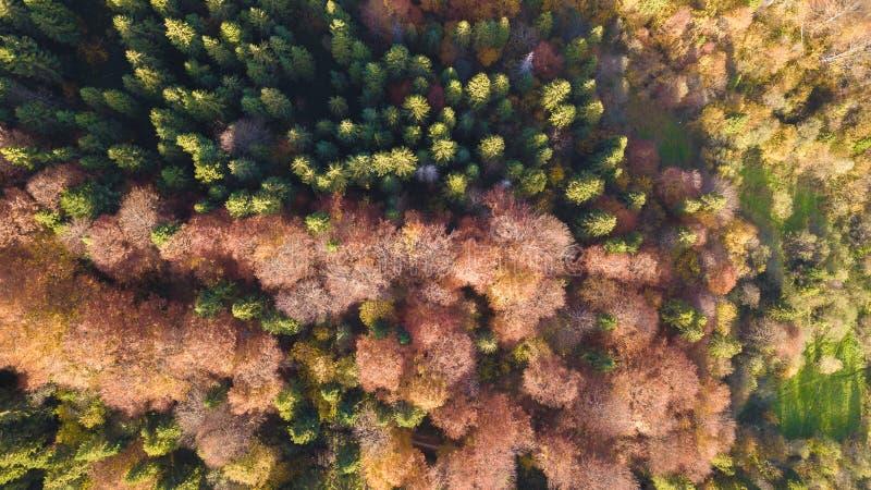 Die B?ume des Waldes von der Draufsicht stockbilder