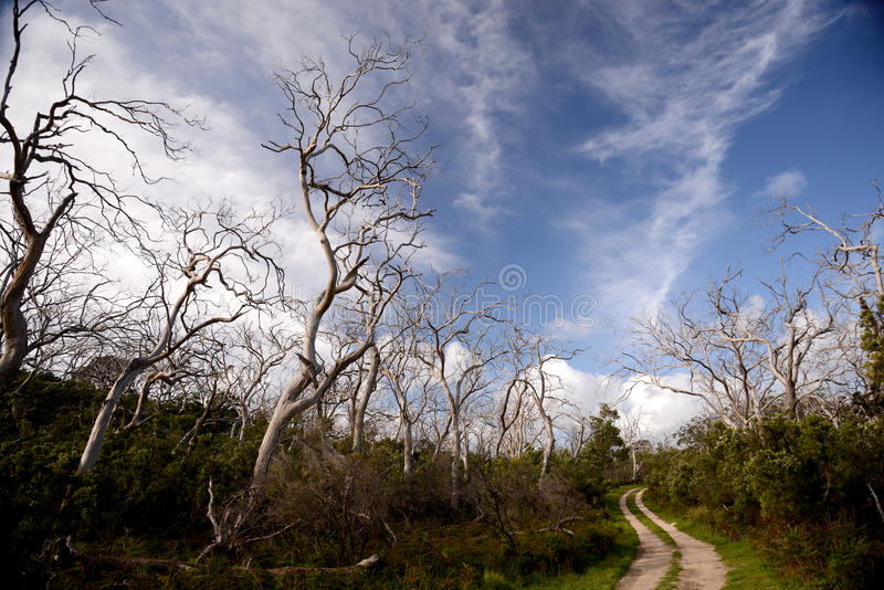 Die back in the outback of Australia royalty free stock images