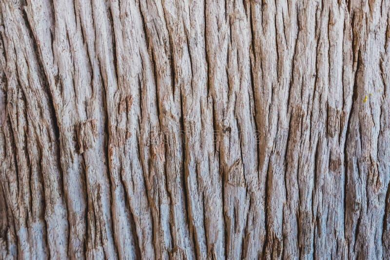 Die Barke des Baums auf dem Flussufer stockfotografie