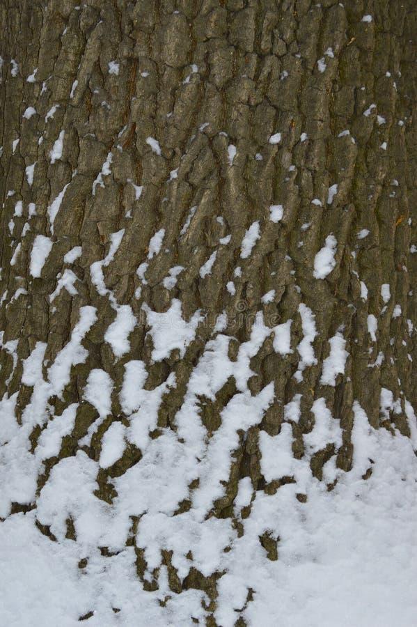 Die Barke des Baums wird mit Schneeflocken bedeckt stockfotografie