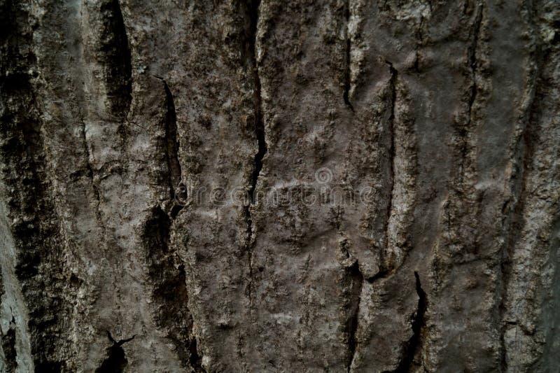 Die Barke einer Walnuss lizenzfreie stockbilder