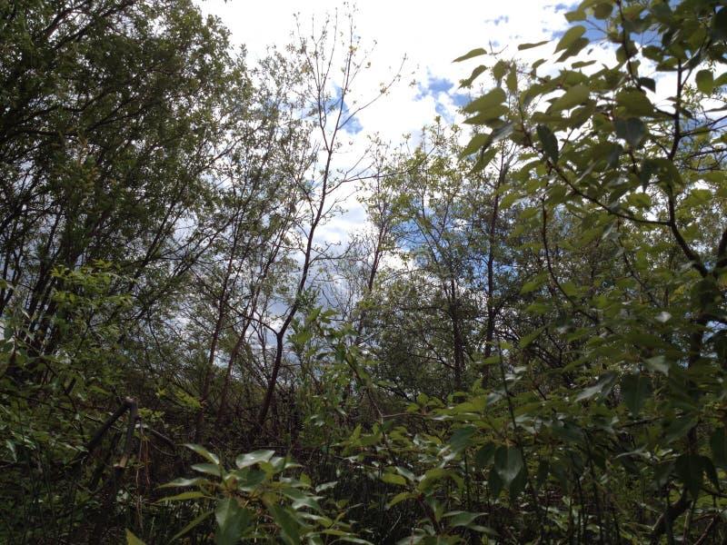 Die Baum-Abenteuer stockfoto