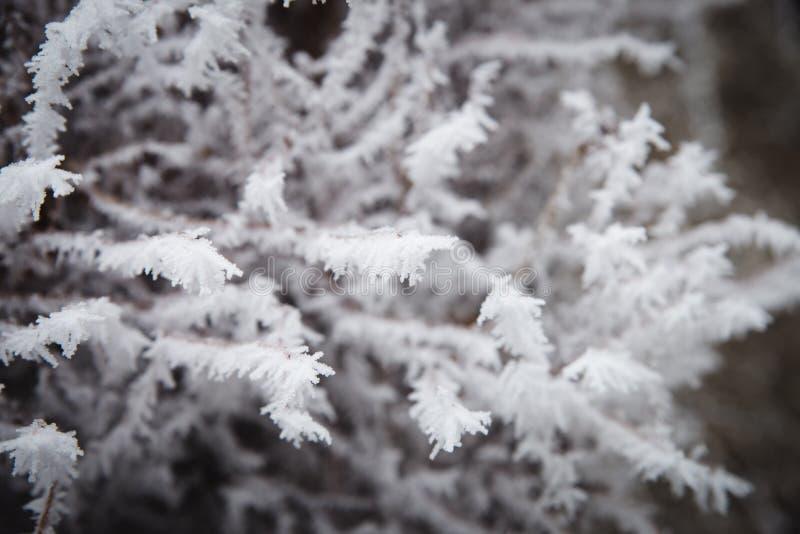 Die Baumaste, die vorbei gefroren wurden, und wurden mit Frost und Schneeflocken auf einem eisigen Winter umfasst stockbild