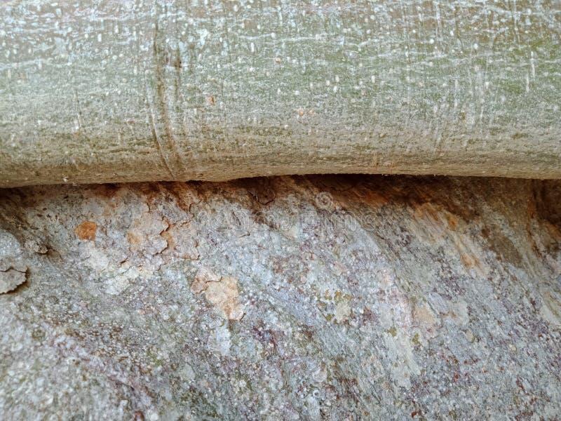 Die Baumwurzeln, die über großem Felsen, Baumwurzeln gewachsen werden, streifen Beschaffenheit, Naturschaffungs-Hintergrundtapete stockfoto