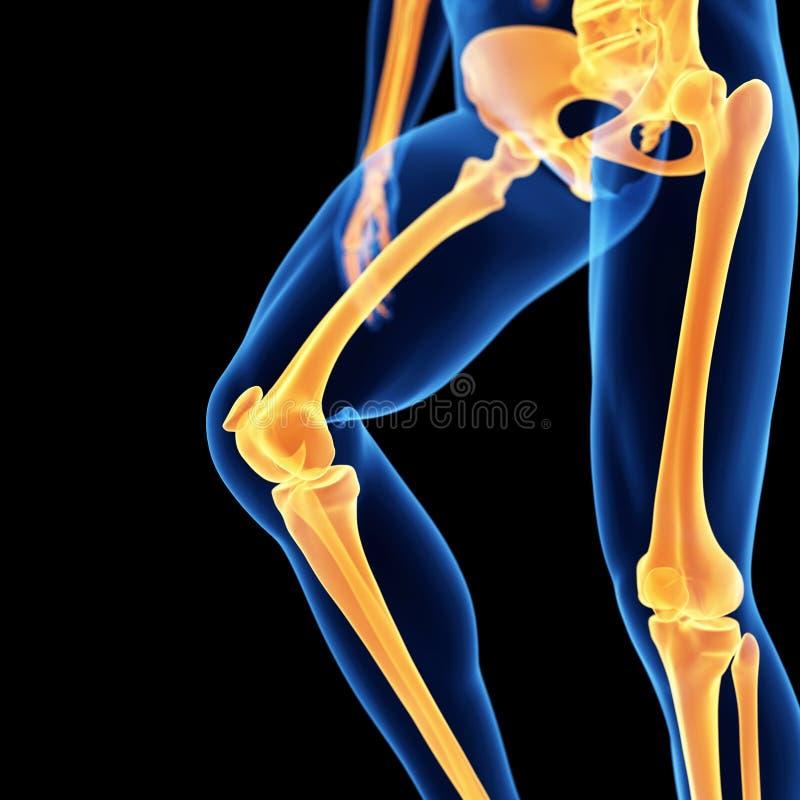 Die Beinknochen stock abbildung. Illustration von skelett - 45275683