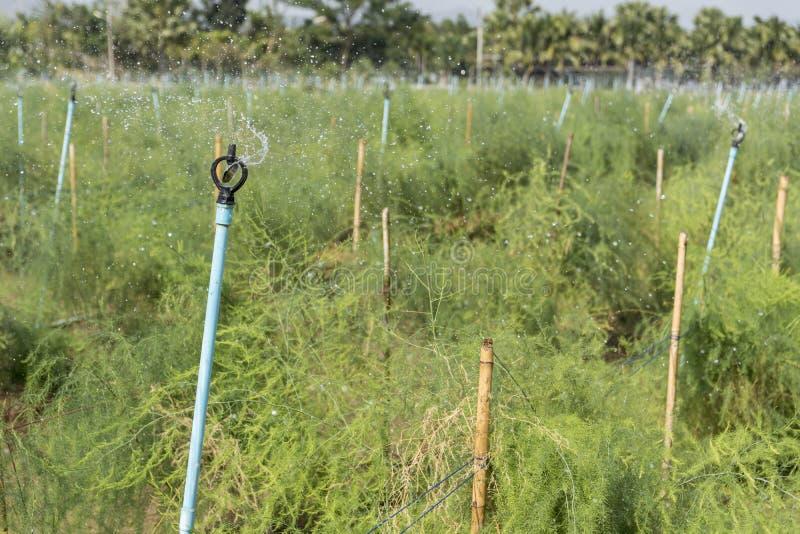 Die Berieselungsanlage, welche die Anlagen wässert stockfoto