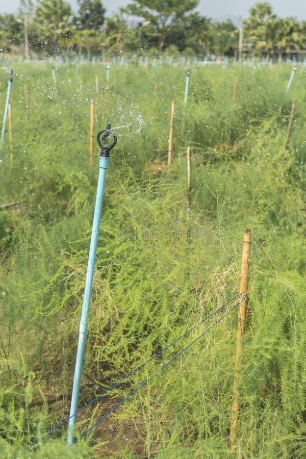Die Berieselungsanlage, welche die Anlagen wässert stockbilder