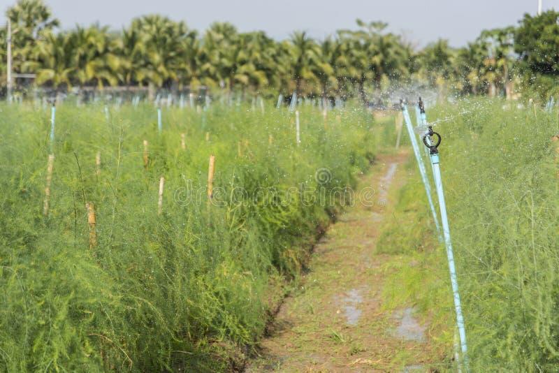 Die Berieselungsanlage, welche die Anlagen wässert stockfotografie