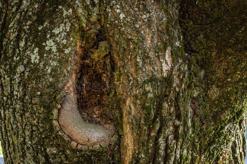 Die Beschaffenheit der Barke eines alten Baums stockbilder