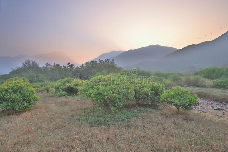 die Beschaffenheit von Sumpfgebiet in Tung Chungs-Fluss stockbild