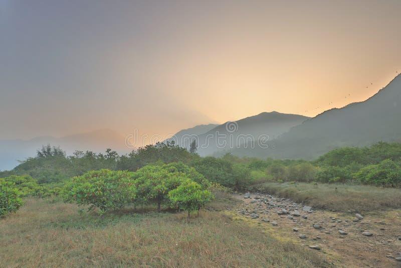 die Beschaffenheit von Sumpfgebiet in Tung Chungs-Fluss lizenzfreie stockfotografie