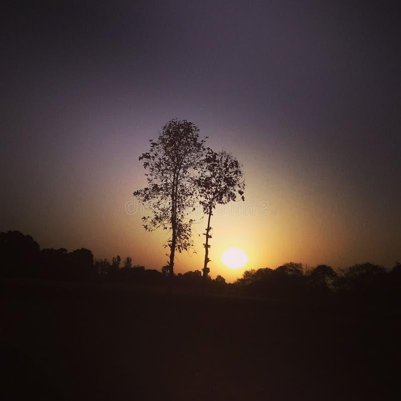 Die bewundernswerten Bäume lizenzfreies stockfoto