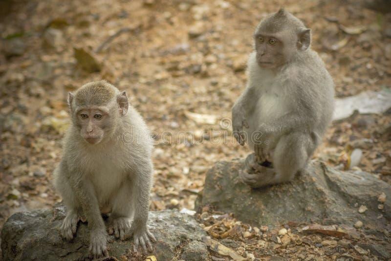 Die Beziehung der Affen stockfotografie