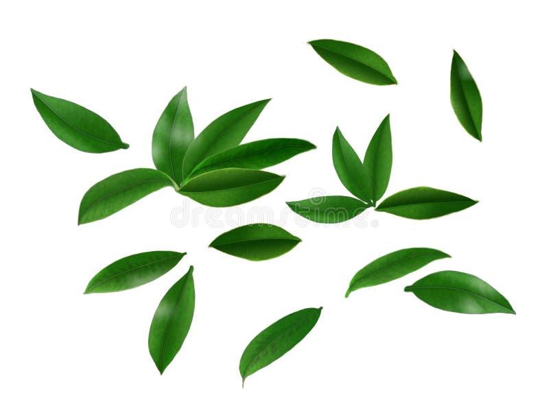 Die Blätter stockfoto