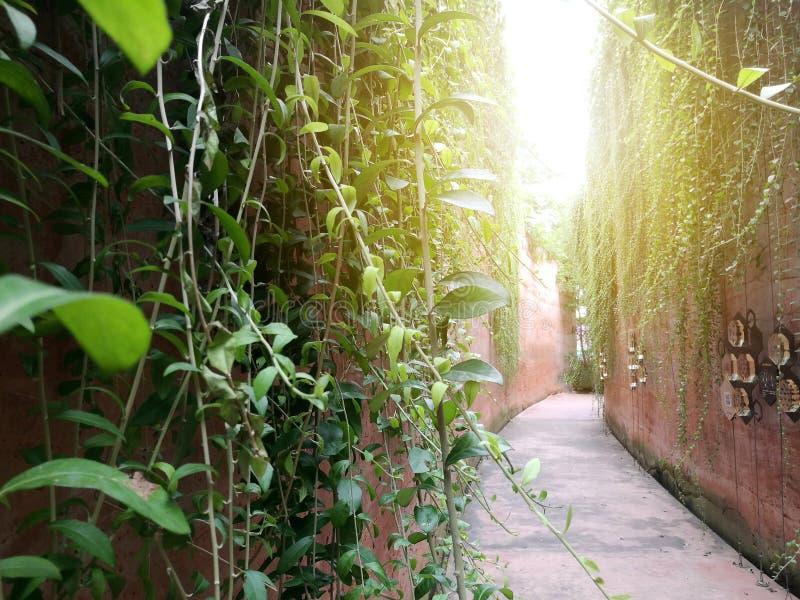 Die Blätter besprühten auf den zwei Seiten der hohen Wand stockfotografie