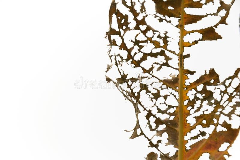 Die Blätter fangen an zu verfallen stockfoto