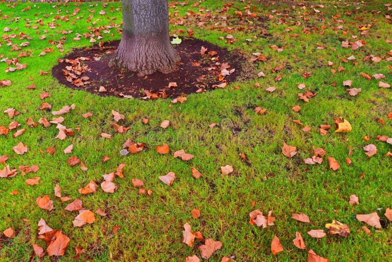 Die Blätter im Herbst lizenzfreie stockfotografie