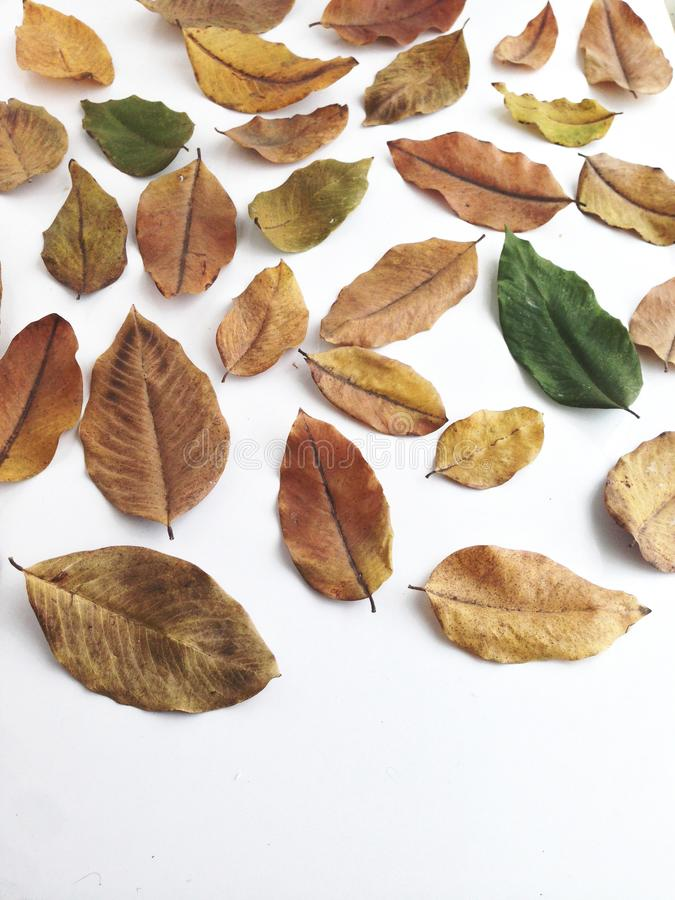 Die Blätter sind so trocken stockbild