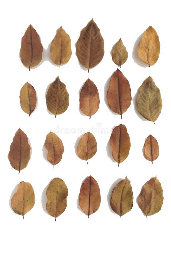 Die Blätter sind so trocken lizenzfreie stockbilder