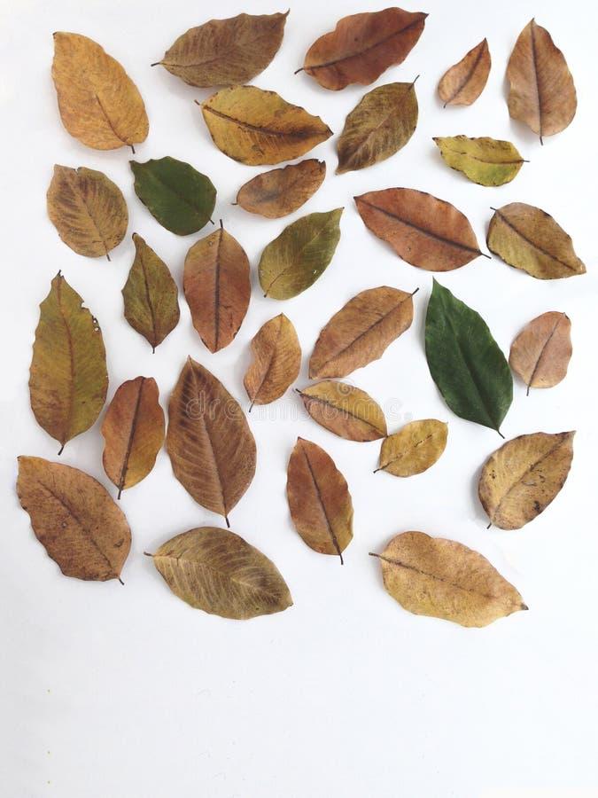 Die Blätter sind so trocken stockfotos