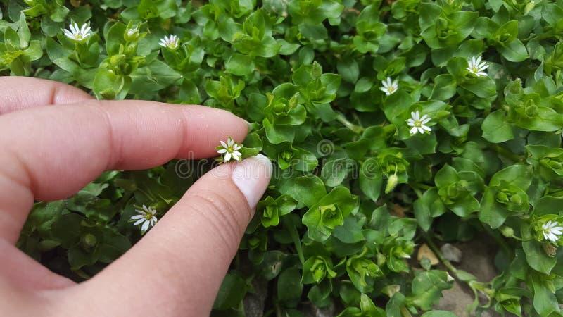 Die Blüte des Lebens stockbild