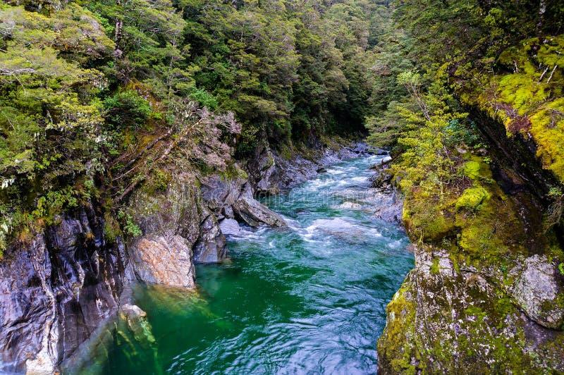 Die blauen Pools von Haast-Durchlauf in Neuseeland stockbilder