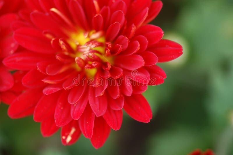 Die Blume lizenzfreies stockbild