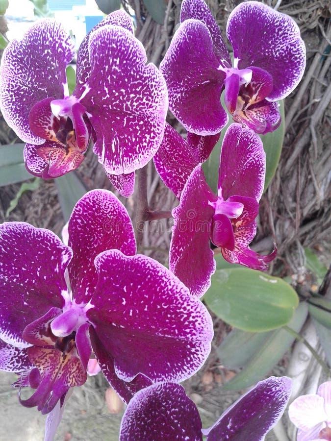Die Blume lizenzfreie stockfotos
