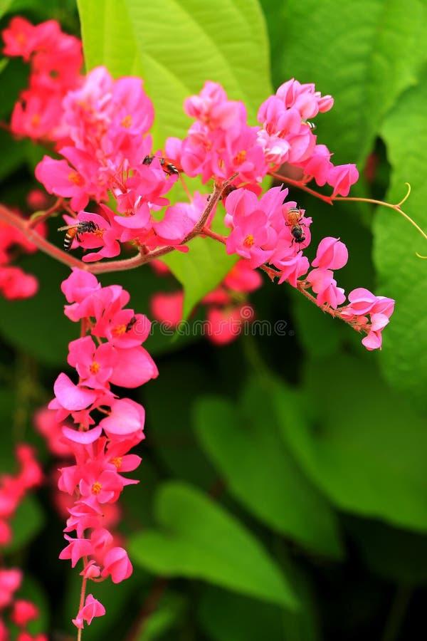 Die Blume, die auf großem Garten blüht lizenzfreies stockbild