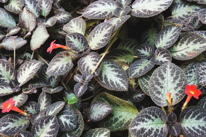 Die Blume des Grases stockfotos