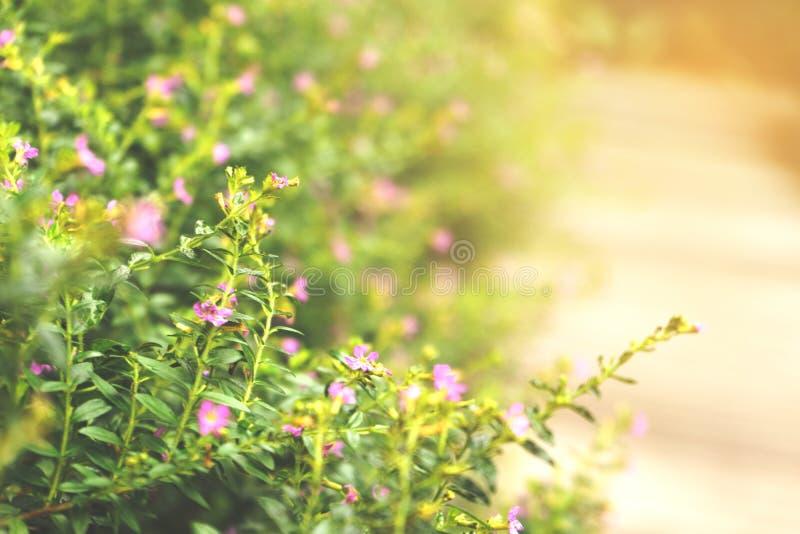 Die Blume des Grases lizenzfreies stockbild