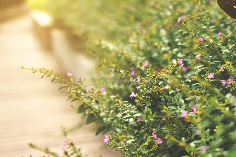 Die Blume des Grases stockbilder