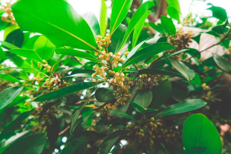 Die Blume des Grases lizenzfreie stockbilder