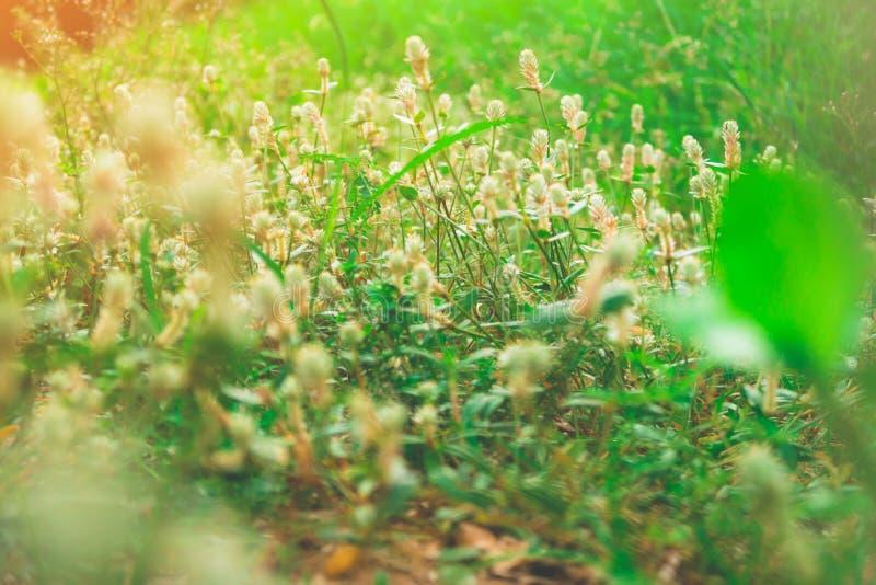 Die Blume des Grases lizenzfreie stockfotografie