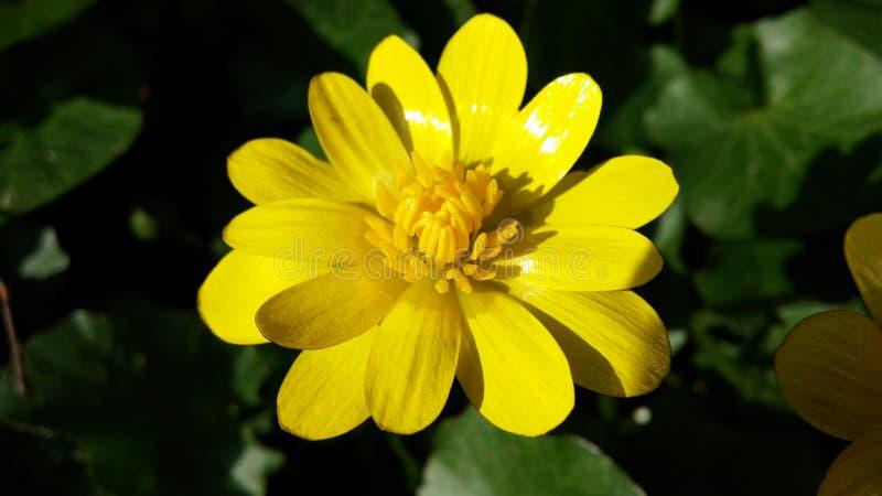 Die Blume des Sommers stockbilder