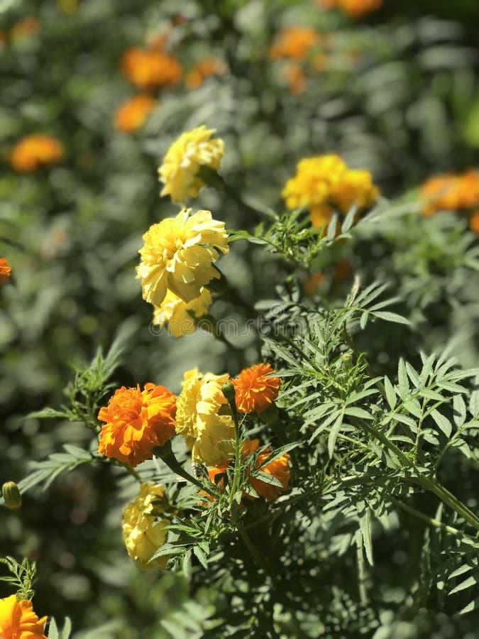 Die Blume lizenzfreie stockfotografie