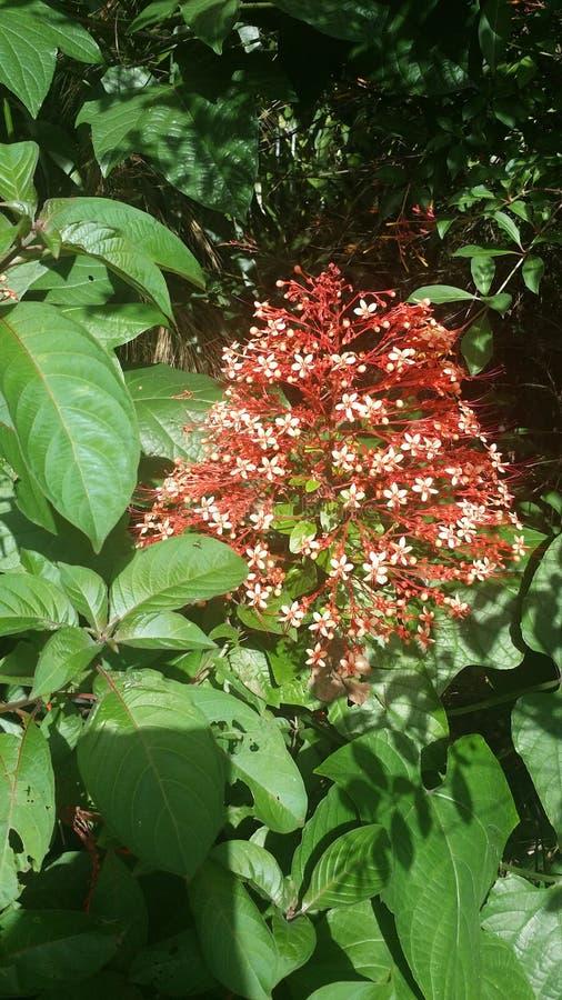 Die Blume wunderbar lizenzfreie stockbilder