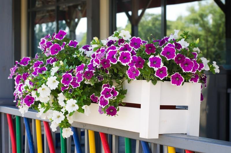 Die Blumen in den hölzernen Pflanzern sind auf dem bunten frence stockfoto