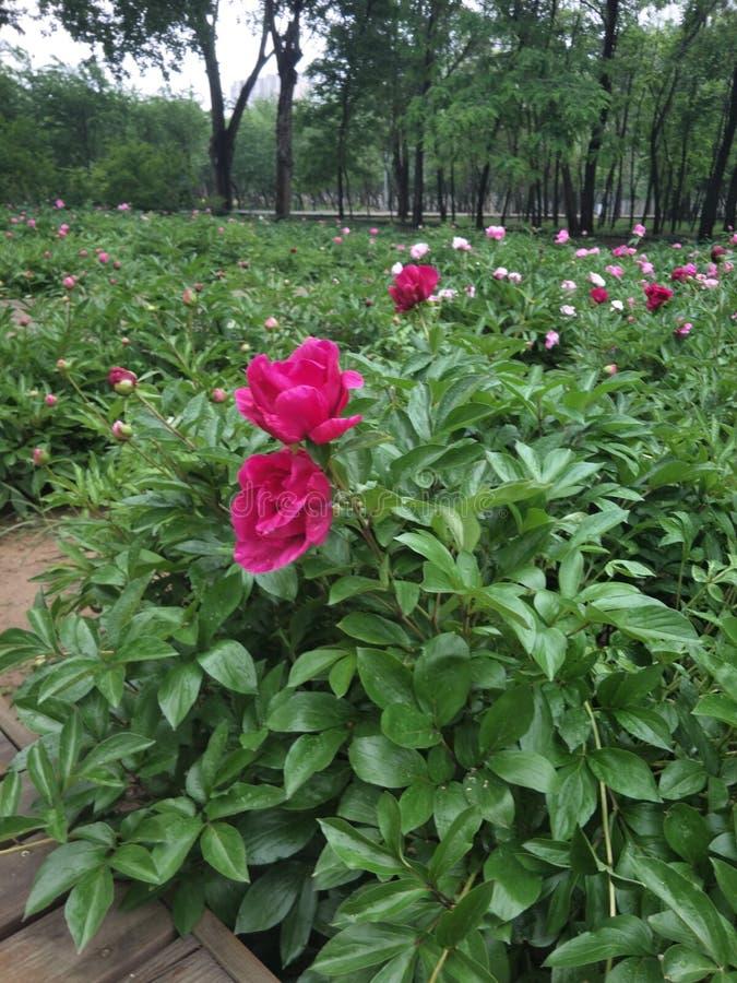 Die Blumen des Morgens stockfotografie