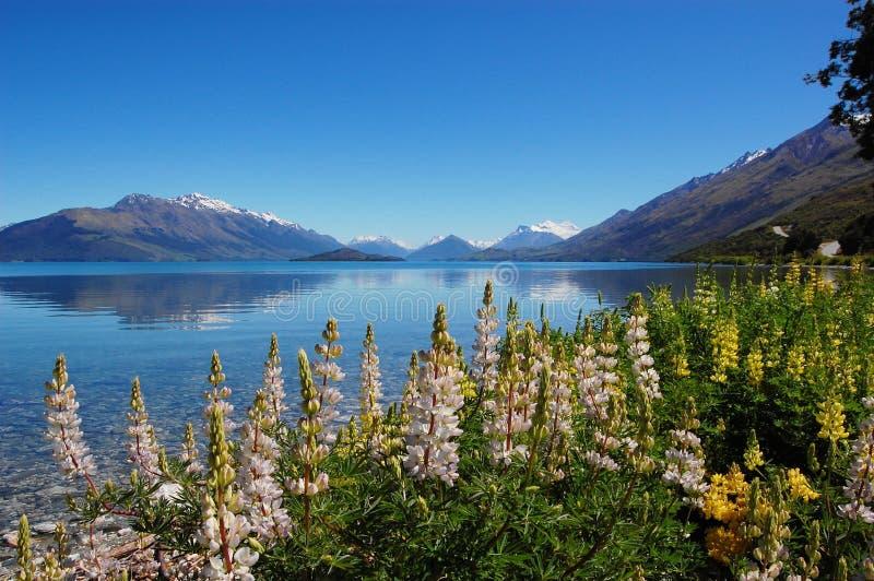 Die Blumen durch den See lizenzfreie stockfotos