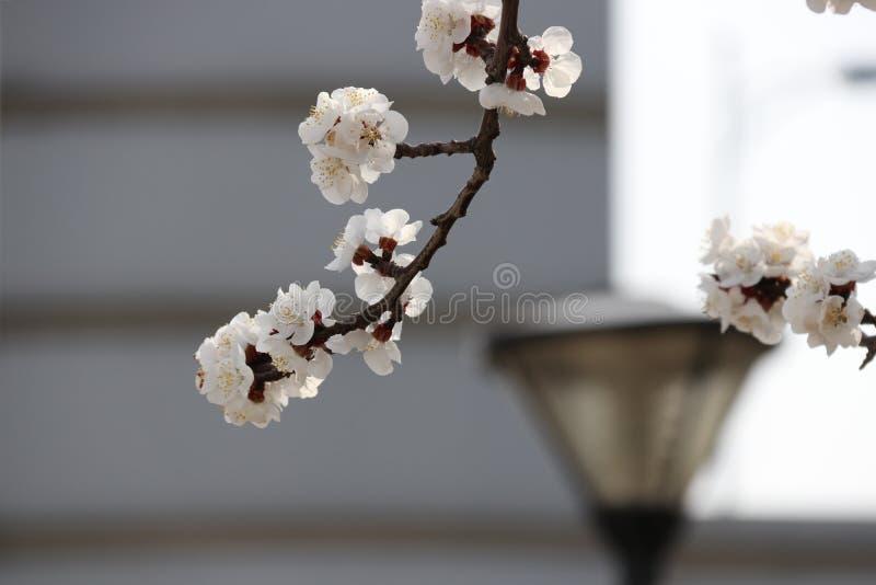 Die Blumen ist lebendig und neu lizenzfreies stockbild