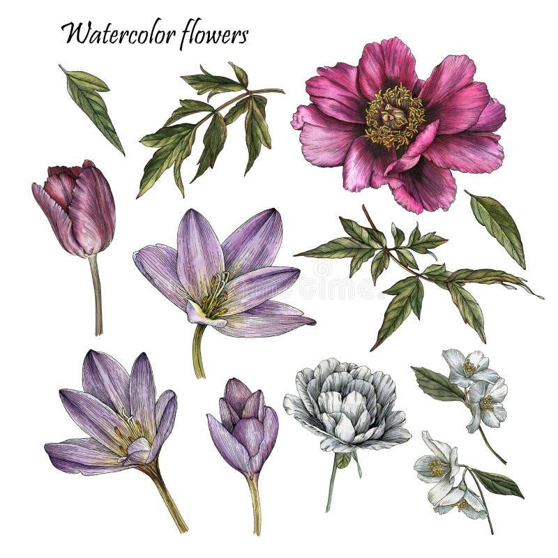 Die Blumen, die von der Aquarellpfingstrose eingestellt wurden, stiegen, Tulpe, Jasminblumen lizenzfreie abbildung