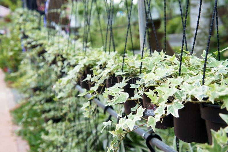 Die Blumen werden in einem hängenden Behälter gepflanzt lizenzfreies stockfoto