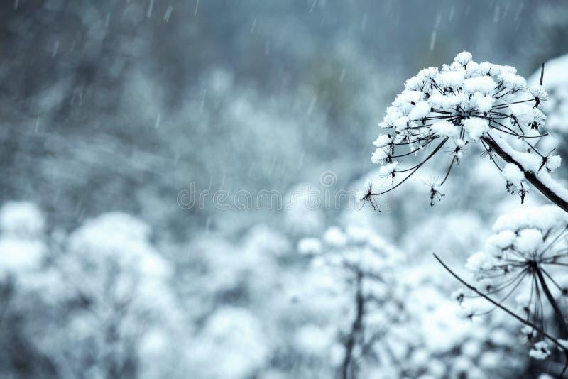 Die Blumen werden mit Eis, Schnee bedeckt stockfoto
