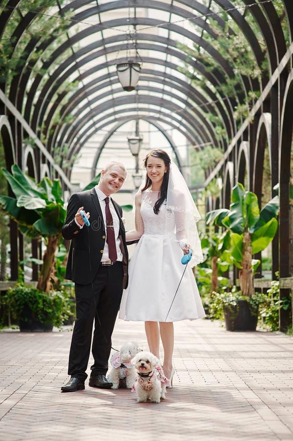 Die Braut und Bräutigam, die in Sommer gehen, parken draußen mit Architektur stockbild